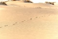 Footsteps on the sand in a desert dunes.  Stock Photography