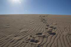 Footsteps in Sand. Footsteps on a sand dune on a sunny day Royalty Free Stock Photos