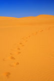 Footsteps on sand dunes Stock Images