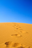 Footsteps on sand dunes Stock Image