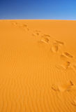 Footsteps on sand dunes. Cloudless sky in background Royalty Free Stock Photos