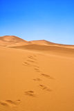 Footsteps on sand dunes Royalty Free Stock Photography