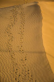 Footsteps on the sand dunes Stock Photography