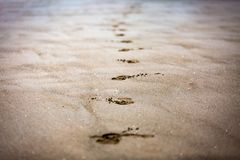Footsteps on sand. Footsteps of people on sand beach Royalty Free Stock Photography