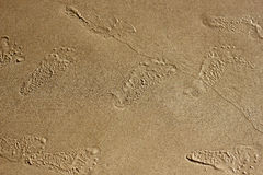 Footsteps on the sand. Kids footsteps left on the wet sand on the beach royalty free stock photos