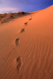 Footsteps on sand Royalty Free Stock Image