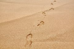 Footsteps in Sand. Footsteps on a sandy beach Stock Images