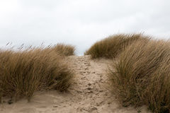 Footsteps in the sand in between sandy grass dunes. Horizontal Royalty Free Stock Images
