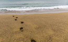 Footsteps on the sand towards the sea royalty free stock photo