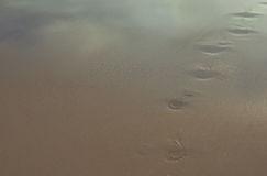 Footsteps on the sandy of the sea Stock Photos