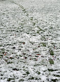 Footsteps in a shallow snow over grass Royalty Free Stock Photography