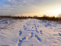 Footsteps in the snow. A country path covered with snow at sunset stock photography