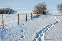 Footsteps in the Snow. A path of footsteps in the fresh white snow along a fence Stock Photos