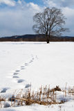 Footsteps in snow. Footsteps in the snow leading to a single tree in a beautiful winter landscape of Hokkaido, Japan Stock Photography