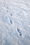 Footsteps in the snow. Approaching mens footsteps in the snow Stock Images