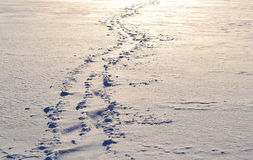 Footsteps on the snow. In sunny winter day Royalty Free Stock Image