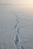 Footsteps in snow. Footsteps in the snow in a sunset landscape with fog Royalty Free Stock Photos