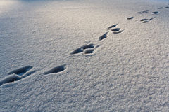 Footsteps on the snow. In winter Stock Image
