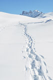 Footsteps on the snow Stock Images