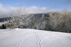 Footsteps in snow. Snowy landscape and animal traces stock photos