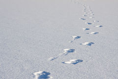 Footsteps in snow. Clear and crisp picture Royalty Free Stock Photography