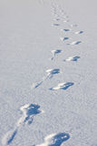 Footsteps in snow Royalty Free Stock Photo