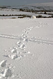 Footsteps in the snow Royalty Free Stock Photography