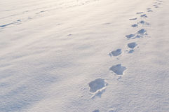 Footsteps in snow Royalty Free Stock Photos