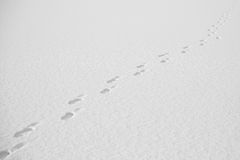 Footsteps in the snow. Footsteps in deep snow on sunny winter day Royalty Free Stock Photos