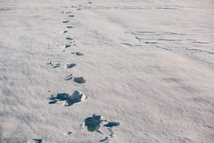 Footsteps on the snow Royalty Free Stock Photo