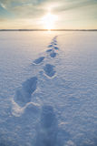 Footsteps on snow at a frozen lake Stock Images