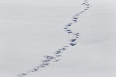 Footsteps on snow. Landscape with footsteps on snow Stock Images
