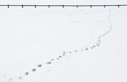 Footsteps in the snow Royalty Free Stock Photo