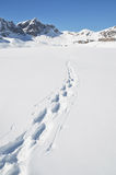 Footsteps on the snow Stock Photography