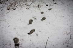 Footsteps in the snow. Some footsteps in the snow Royalty Free Stock Image