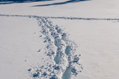 Footsteps in snow Royalty Free Stock Image