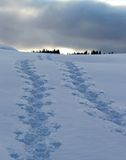 Footsteps in the snow Royalty Free Stock Photos