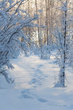 Footsteps in a snowy forest Royalty Free Stock Photography