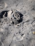 Footsteps in Sand Half Erased royalty free stock photo