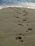 Footsteps to nowhere. Footsteps on a beach in the Bahamas Royalty Free Stock Image
