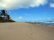 Footsteps to nowhere. A beach with footsteps, East Coast of Barbados Royalty Free Stock Photography