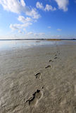 Footsteps on wet sand. In nice summer day Royalty Free Stock Photos