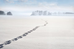 Footsteps on winter lake Stock Photography