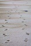 Footstpes na areia Imagem de Stock Royalty Free