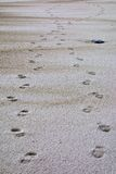 Footstpes in sand Royalty Free Stock Image