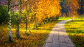 Footway through birch alley Royalty Free Stock Images