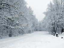footway lasu śnieżni Zdjęcie Royalty Free