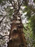 Forêt royaltyfria foton