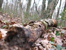 Forêt för en för Tronc d'arbremort Arkivfoton