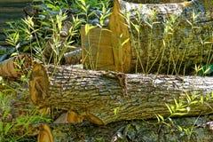 Força da vida da árvore reduzida Imagem de Stock Royalty Free